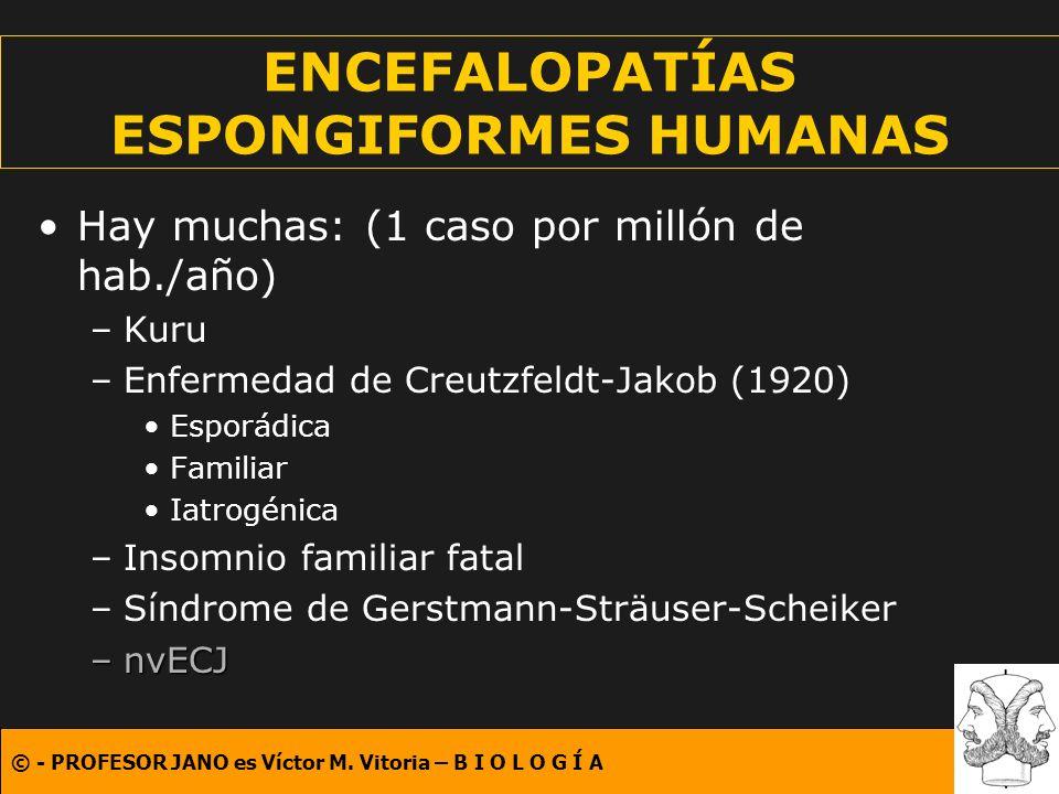 © - PROFESOR JANO es Víctor M. Vitoria – B I O L O G Í A ENCEFALOPATÍAS ESPONGIFORMES HUMANAS Hay muchas: (1 caso por millón de hab./año) –Kuru –Enfer