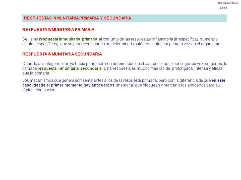 Biología 2º BAC Tema 5 RESPUESTAS INMUNITARIA PRIMARIA Y SECUNDARIA Se llama respuesta inmunitaria primaria al conjunto de las respuestas inflamatoria