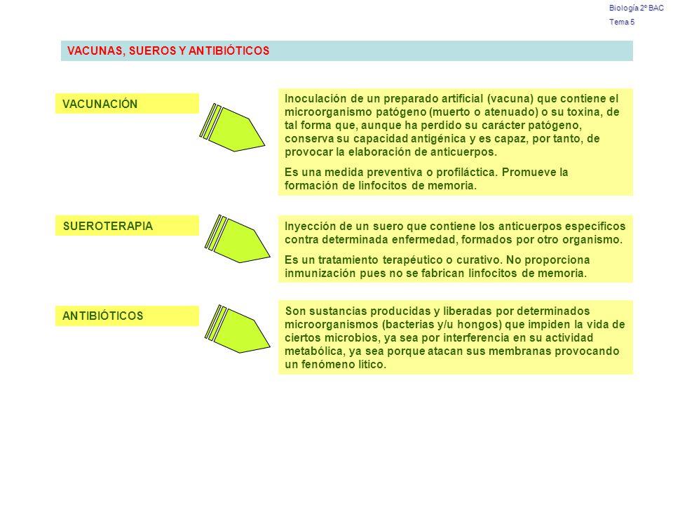 Biología 2º BAC Tema 5 VACUNAS, SUEROS Y ANTIBIÓTICOS VACUNACIÓN SUEROTERAPIA ANTIBIÓTICOS Inoculación de un preparado artificial (vacuna) que contien