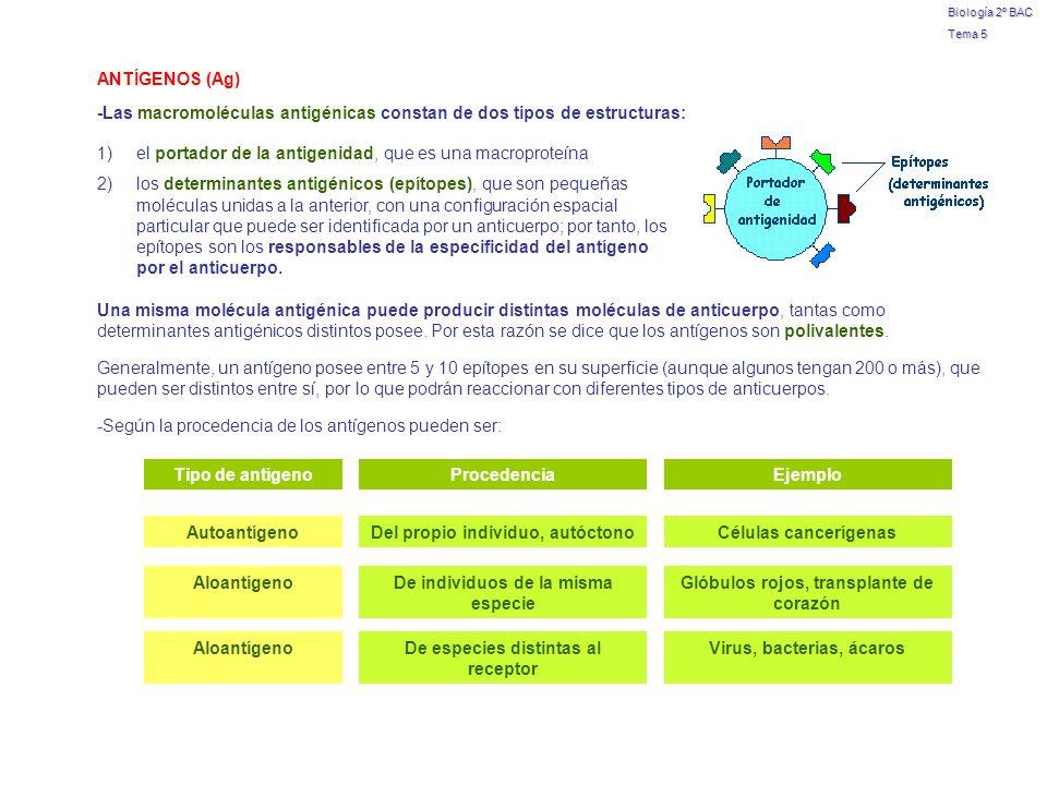 Biología 2º BAC Tema 5 -Las macromoléculas antigénicas constan de dos tipos de estructuras: 1)el portador de la antigenidad, que es una macroproteína