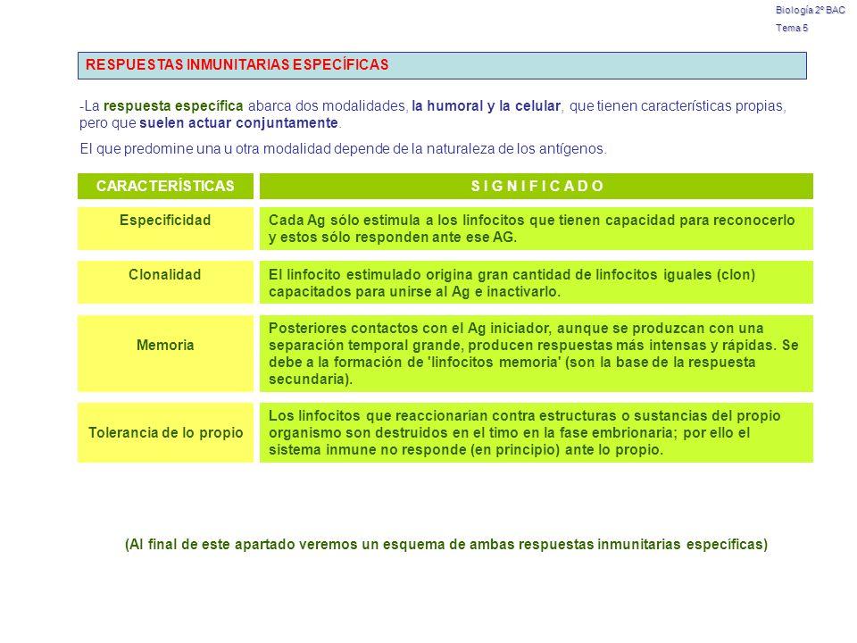 Biología 2º BAC Tema 5 RESPUESTAS INMUNITARIAS ESPECÍFICAS -La respuesta específica abarca dos modalidades, la humoral y la celular, que tienen caract