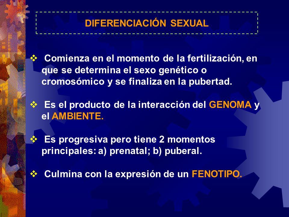 DIFERENCIACIÓN SEXUAL Comienza en el momento de la fertilización, en que se determina el sexo genético o cromosómico y se finaliza en la pubertad. Es