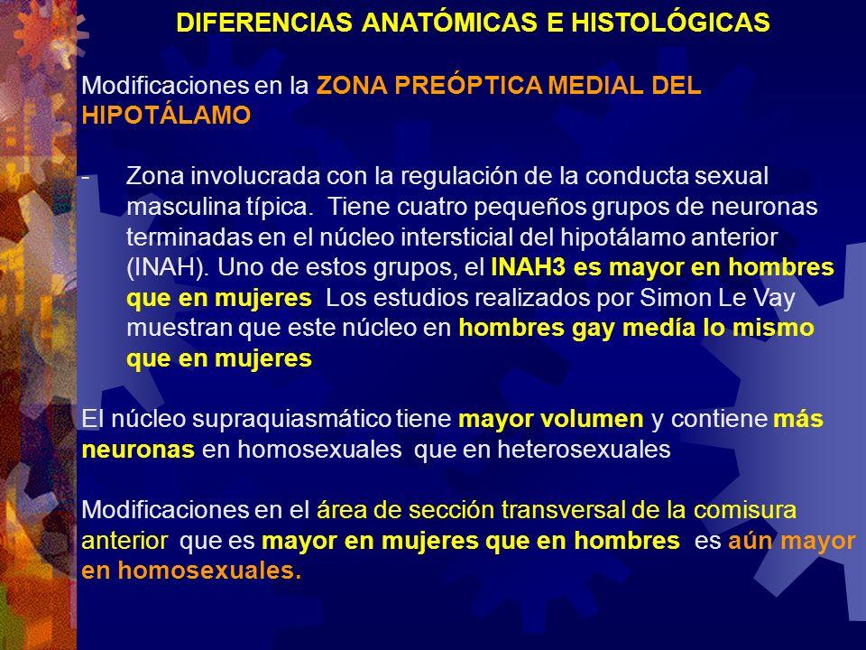 DIFERENCIAS ANATÓMICAS E HISTOLÓGICAS Modificaciones en la ZONA PREÓPTICA MEDIAL DEL HIPOTÁLAMO: - Zona involucrada con la regulación de la conducta s