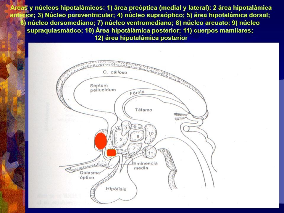 Areas y núcleos hipotalámicos: 1) área preóptica (medial y lateral); 2 área hipotalámica anterior; 3) Núcleo paraventricular; 4) núcleo supraóptico; 5