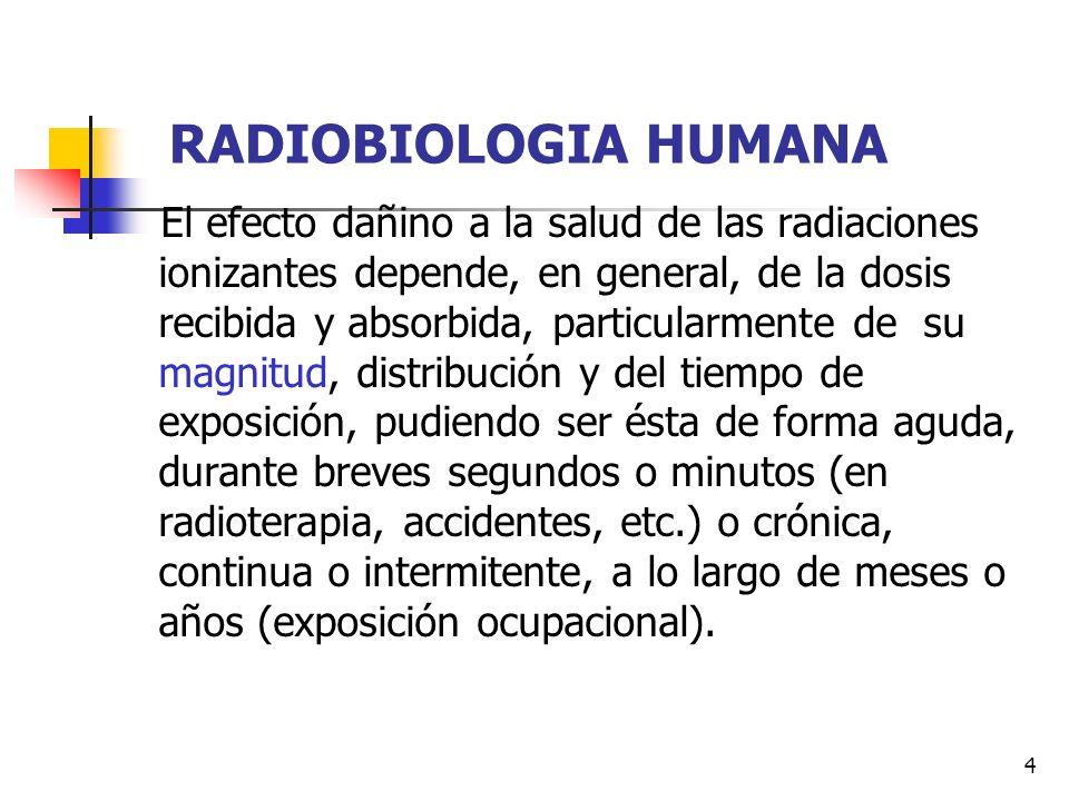5 RADIOBIOLOGIA HUMANA Las células y tejidos proliferativos (ejs, las células germinales de las gónadas, el tejido hematopoyético, etc.) son más radiosensibles que aquellos tejidos compuestos por células diferenciadas no proliferativas (ejs., el tejido muscular, el neurológico, el óseo, etc.).