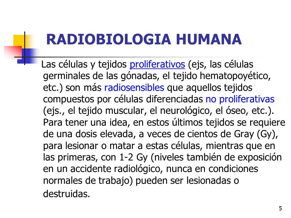 6 RADIOBIOLOGIA HUMANA Como se observa, los tejidos inmaduros o en constante división celular son más radiosensibles.