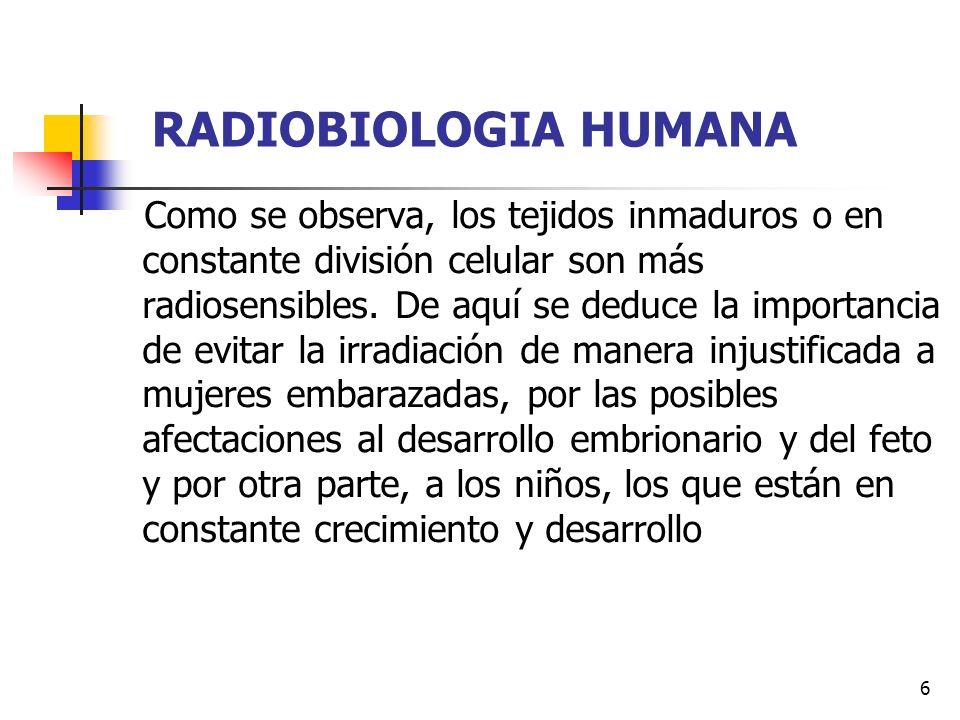 7 RADIOBIOLOGIA HUMANA En tejidos estables: Son radioresistentes.