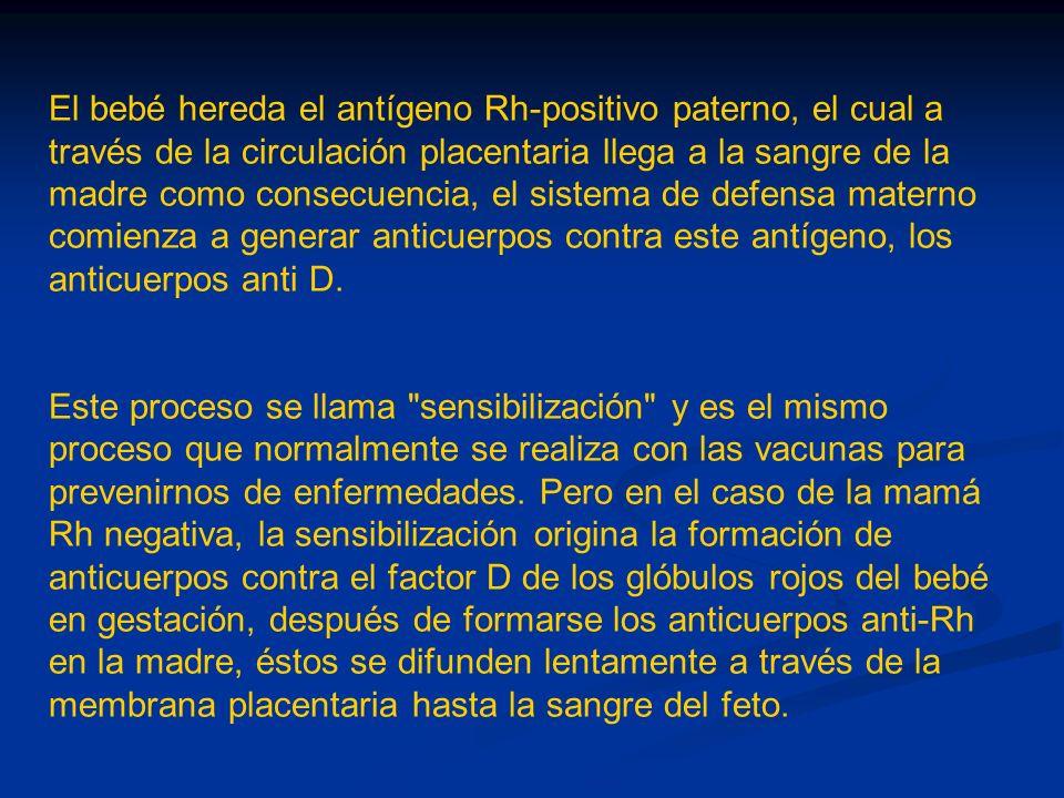 El bebé hereda el antígeno Rh-positivo paterno, el cual a través de la circulación placentaria llega a la sangre de la madre como consecuencia, el sis