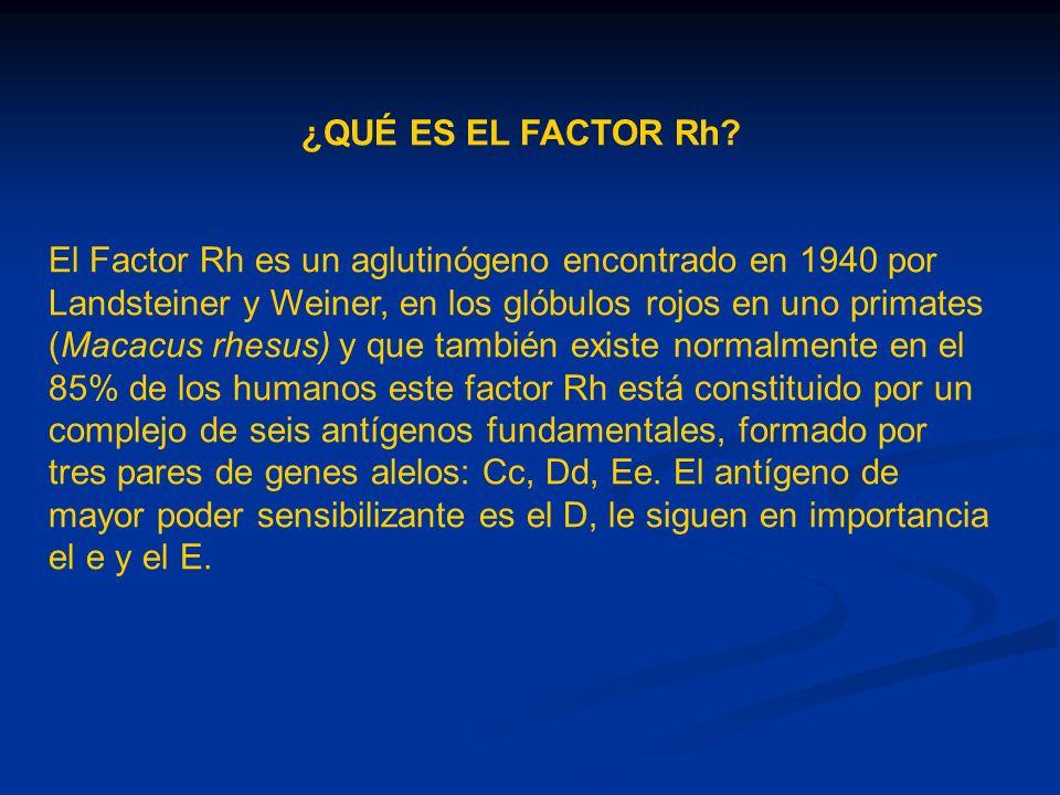 ¿QUÉ ES EL FACTOR Rh? El Factor Rh es un aglutinógeno encontrado en 1940 por Landsteiner y Weiner, en los glóbulos rojos en uno primates (Macacus rhes