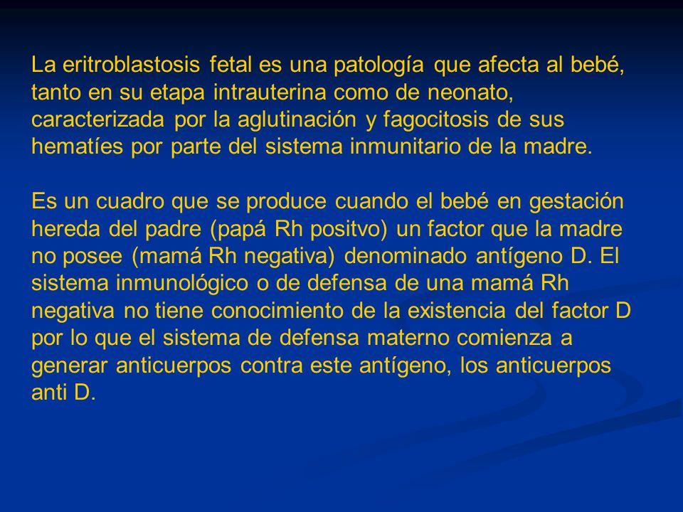 La eritroblastosis fetal es una patología que afecta al bebé, tanto en su etapa intrauterina como de neonato, caracterizada por la aglutinación y fago