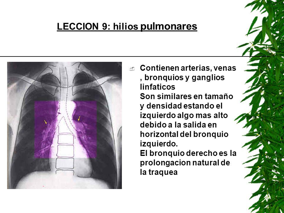 Contienen arterias, venas, bronquios y ganglios linfaticos Son similares en tamaño y densidad estando el izquierdo algo mas alto debido a la salida en