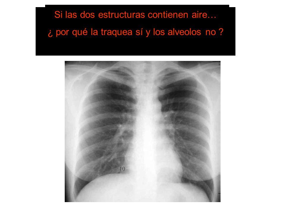SISTEMA DE LECTURA TRAQUEA Centrada. Se bifurca en bronquios principales. BRONQUIOLOS Y ALVEOLOS No se distinguen en condiciones normales. Si las dos