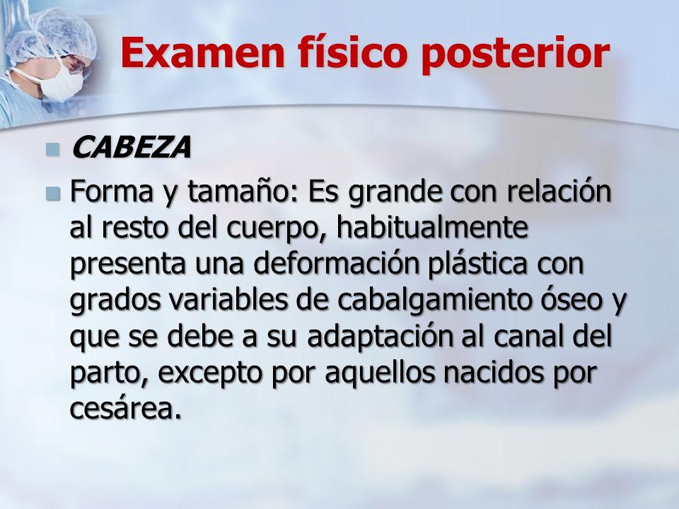 Examen físico posterior CABEZA CABEZA Forma y tamaño: Es grande con relación al resto del cuerpo, habitualmente presenta una deformación plástica con
