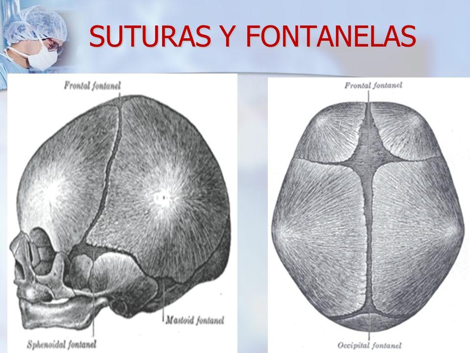 SUTURAS Y FONTANELAS