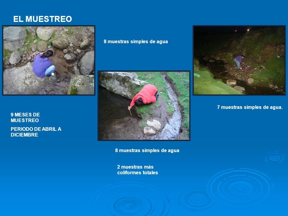 EL MUESTREO 9 MESES DE MUESTREO PERIODO DE ABRIL A DICIEMBRE 8 muestras simples de agua 7 muestras simples de agua. 2 muestras más coliformes totales