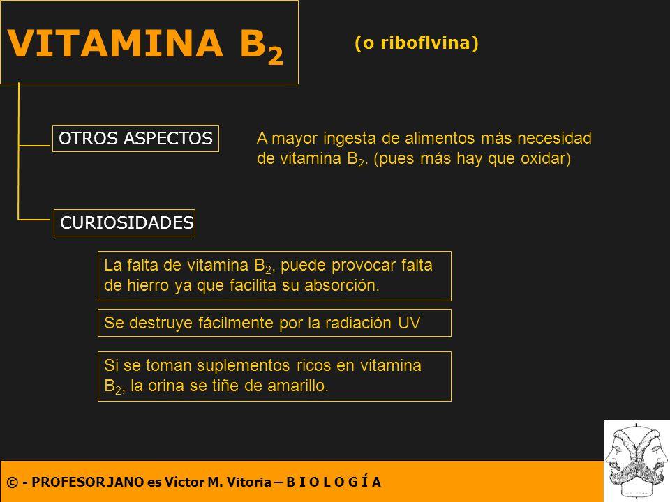 © - PROFESOR JANO es Víctor M. Vitoria – B I O L O G Í A VITAMINA B 2 (o riboflvina) OTROS ASPECTOS CURIOSIDADES A mayor ingesta de alimentos más nece