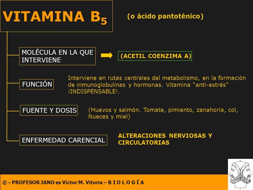 © - PROFESOR JANO es Víctor M. Vitoria – B I O L O G Í A VITAMINA B 5 (o ácido pantoténico) MOLÉCULA EN LA QUE INTERVIENE FUNCIÓN FUENTE Y DOSIS ENFER