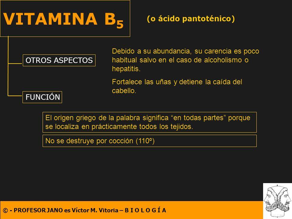 © - PROFESOR JANO es Víctor M. Vitoria – B I O L O G Í A VITAMINA B 5 (o ácido pantoténico) OTROS ASPECTOS FUNCIÓN El origen griego de la palabra sign