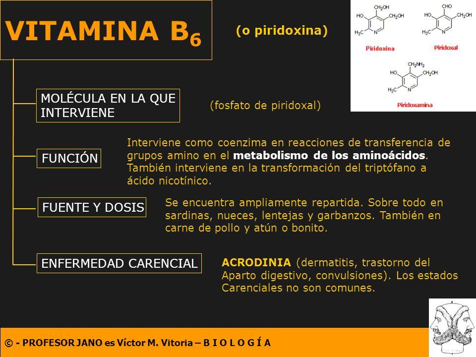 © - PROFESOR JANO es Víctor M. Vitoria – B I O L O G Í A VITAMINA B 6 (o piridoxina) MOLÉCULA EN LA QUE INTERVIENE FUNCIÓN FUENTE Y DOSIS ENFERMEDAD C