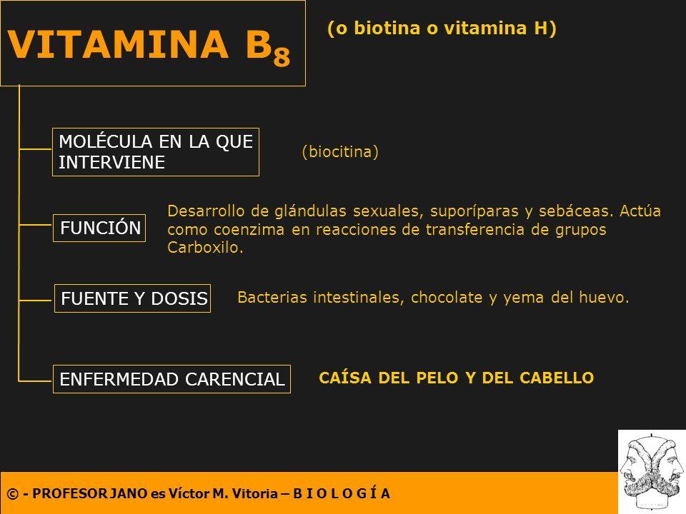 © - PROFESOR JANO es Víctor M. Vitoria – B I O L O G Í A VITAMINA B 8 (o biotina o vitamina H) MOLÉCULA EN LA QUE INTERVIENE FUNCIÓN FUENTE Y DOSIS EN