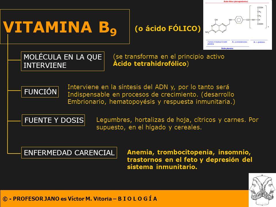 © - PROFESOR JANO es Víctor M. Vitoria – B I O L O G Í A VITAMINA B 9 (o ácido FÓLICO) MOLÉCULA EN LA QUE INTERVIENE FUNCIÓN FUENTE Y DOSIS ENFERMEDAD
