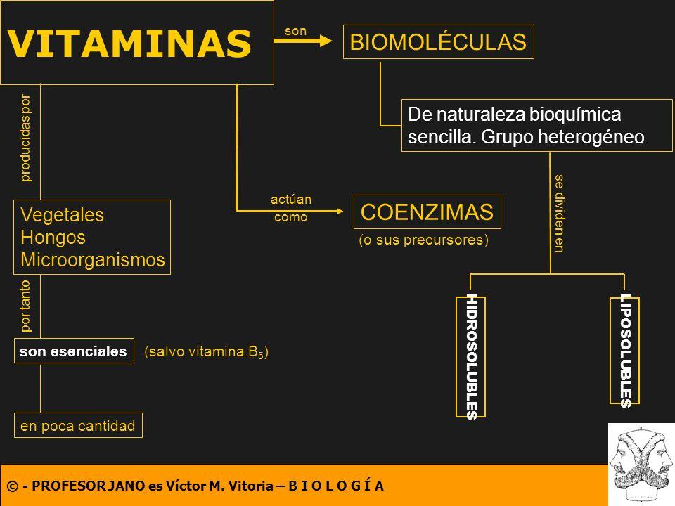© - PROFESOR JANO es Víctor M. Vitoria – B I O L O G Í A VITAMINAS BIOMOLÉCULAS son De naturaleza bioquímica sencilla. Grupo heterogéneo. producidas p