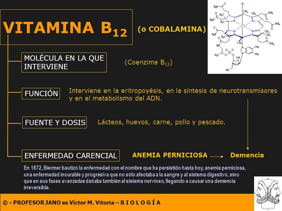 © - PROFESOR JANO es Víctor M. Vitoria – B I O L O G Í A VITAMINA B 12 (o COBALAMINA) MOLÉCULA EN LA QUE INTERVIENE FUNCIÓN FUENTE Y DOSIS ENFERMEDAD