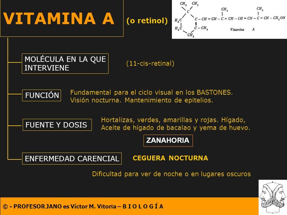 © - PROFESOR JANO es Víctor M. Vitoria – B I O L O G Í A VITAMINA A (o retinol) MOLÉCULA EN LA QUE INTERVIENE FUNCIÓN FUENTE Y DOSIS ENFERMEDAD CARENC