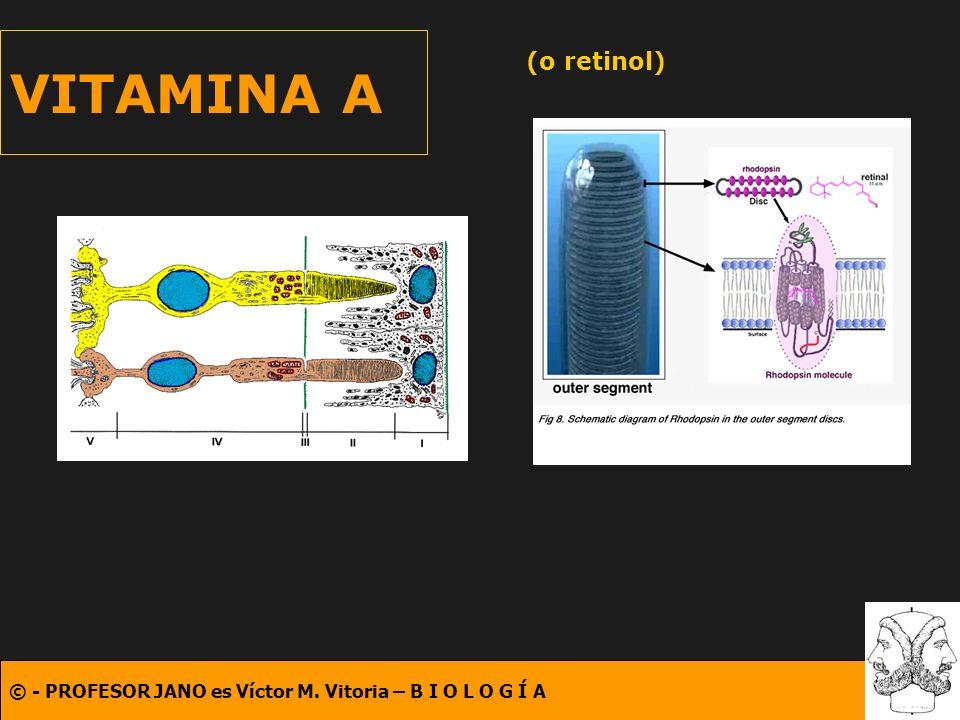 © - PROFESOR JANO es Víctor M. Vitoria – B I O L O G Í A VITAMINA A (o retinol)