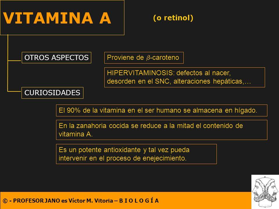 © - PROFESOR JANO es Víctor M. Vitoria – B I O L O G Í A VITAMINA A (o retinol) OTROS ASPECTOS CURIOSIDADES Proviene de -caroteno El 90% de la vitamin