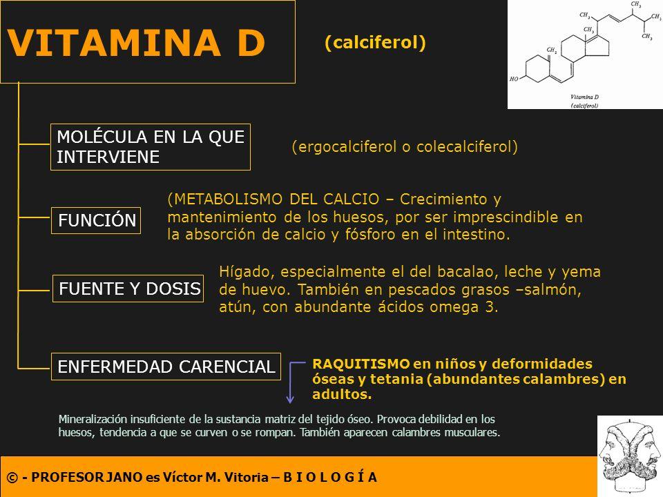 © - PROFESOR JANO es Víctor M. Vitoria – B I O L O G Í A VITAMINA D (calciferol) MOLÉCULA EN LA QUE INTERVIENE FUNCIÓN FUENTE Y DOSIS ENFERMEDAD CAREN