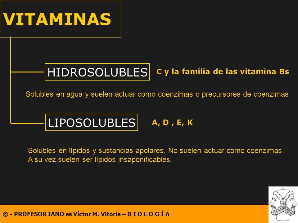 © - PROFESOR JANO es Víctor M. Vitoria – B I O L O G Í A VITAMINAS HIDROSOLUBLES LIPOSOLUBLES Solubles en agua y suelen actuar como coenzimas o precur
