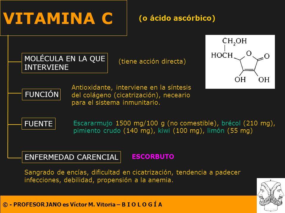 © - PROFESOR JANO es Víctor M. Vitoria – B I O L O G Í A VITAMINA C (o ácido ascórbico) MOLÉCULA EN LA QUE INTERVIENE FUNCIÓN FUENTE ENFERMEDAD CARENC