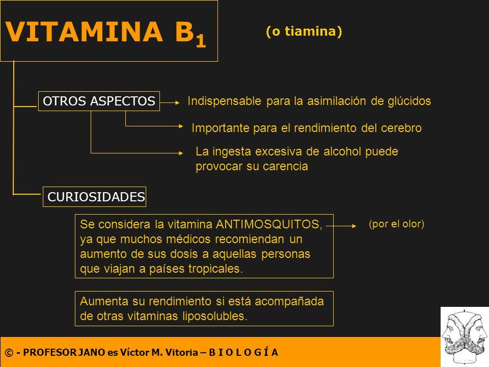 © - PROFESOR JANO es Víctor M. Vitoria – B I O L O G Í A VITAMINA B 1 (o tiamina) OTROS ASPECTOS CURIOSIDADES Indispensable para la asimilación de glú