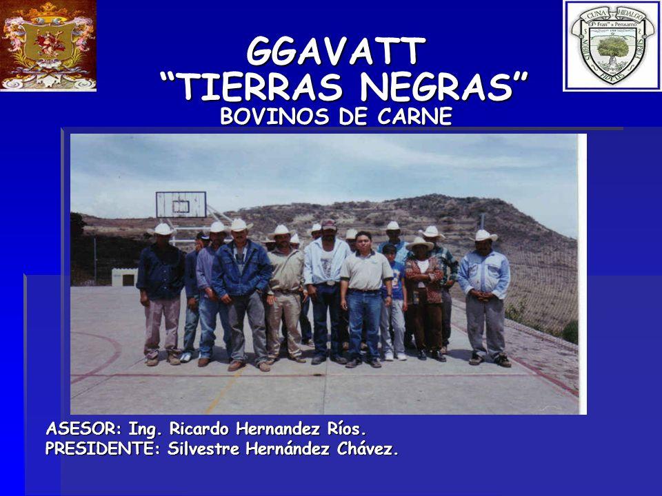 GGAVATT TIERRAS NEGRAS BOVINOS DE CARNE ASESOR: Ing. Ricardo Hernandez Ríos. PRESIDENTE: Silvestre Hernández Chávez.