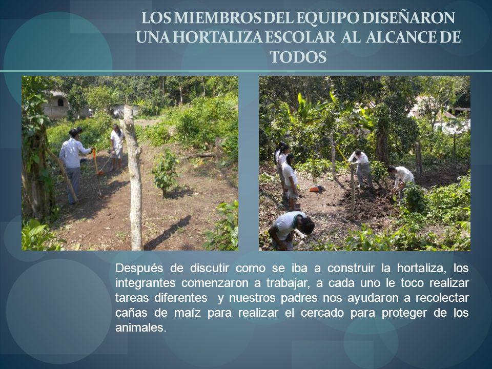LOS MIEMBROS DEL EQUIPO DISEÑARON UNA HORTALIZA ESCOLAR AL ALCANCE DE TODOS Después de discutir como se iba a construir la hortaliza, los integrantes
