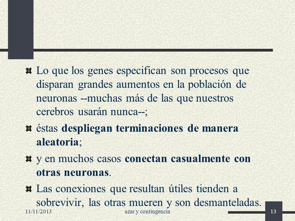 11/11/2013azar y contingencia13 Lo que los genes especifican son procesos que disparan grandes aumentos en la población de neuronas --muchas más de la