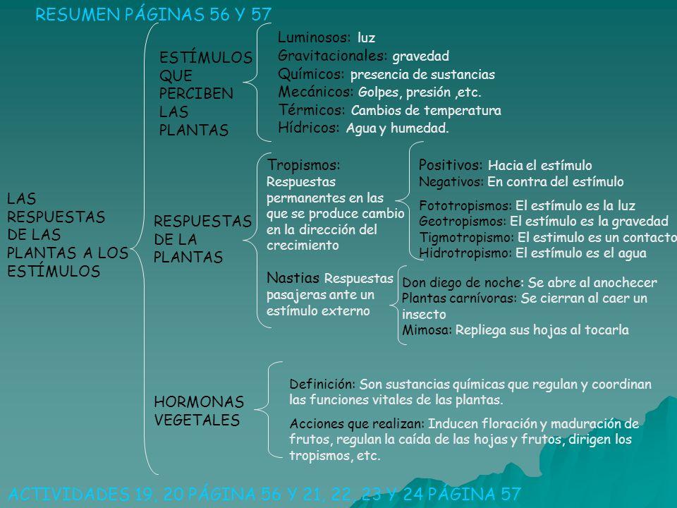 LAS RESPUESTAS DE LAS PLANTAS A LOS ESTÍMULOS RESUMEN PÁGINAS 56 Y 57 ACTIVIDADES 19, 20 PÁGINA 56 Y 21, 22, 23 Y 24 PÁGINA 57 ESTÍMULOS QUE PERCIBEN