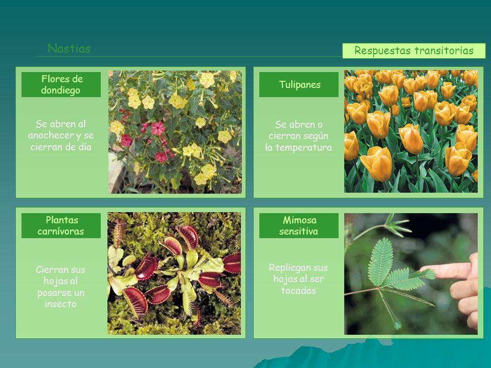 Nastias Flores de dondiego Plantas carnívoras Tulipanes Mimosa sensitiva Se abren al anochecer y se cierran de día Cierran sus hojas al posarse un ins