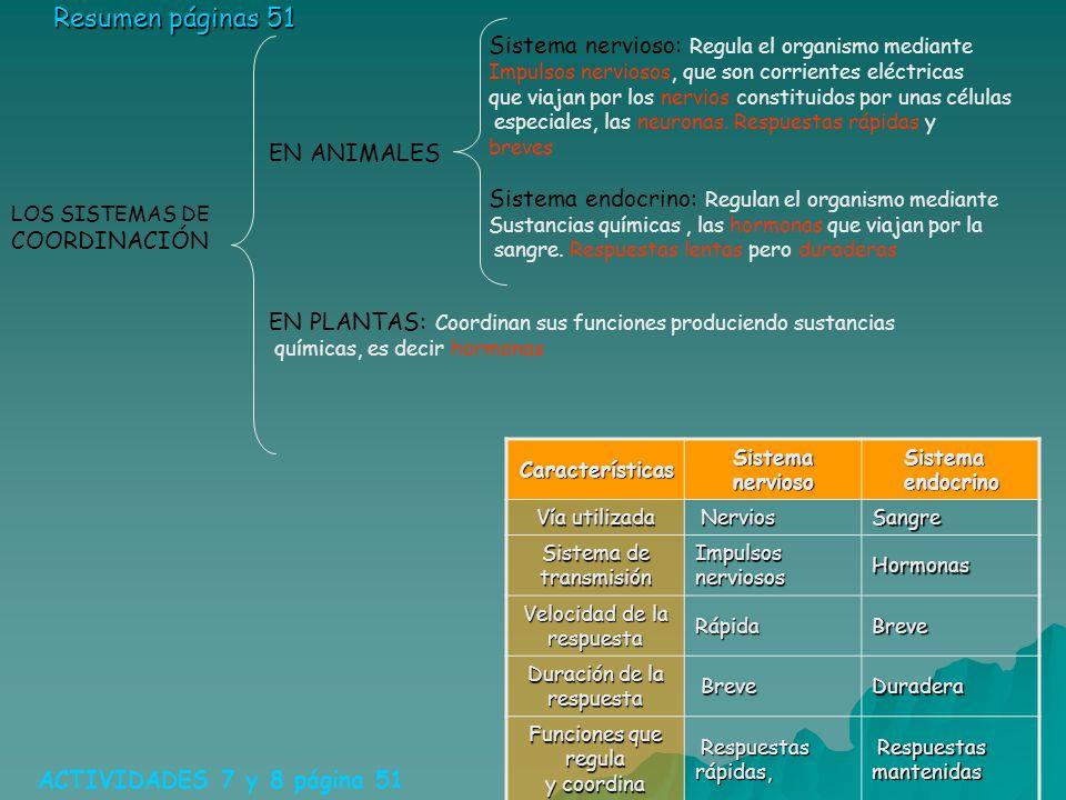 LOS SISTEMAS DE COORDINACIÓN ACTIVIDADES 7 y 8 página 51 Resumen páginas 51 Características Sistema nervioso Sistema endocrino Vía utilizada Nervios N