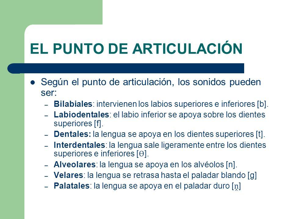 EL PUNTO DE ARTICULACIÓN Según el punto de articulación, los sonidos pueden ser: – Bilabiales: intervienen los labios superiores e inferiores [b]. – L