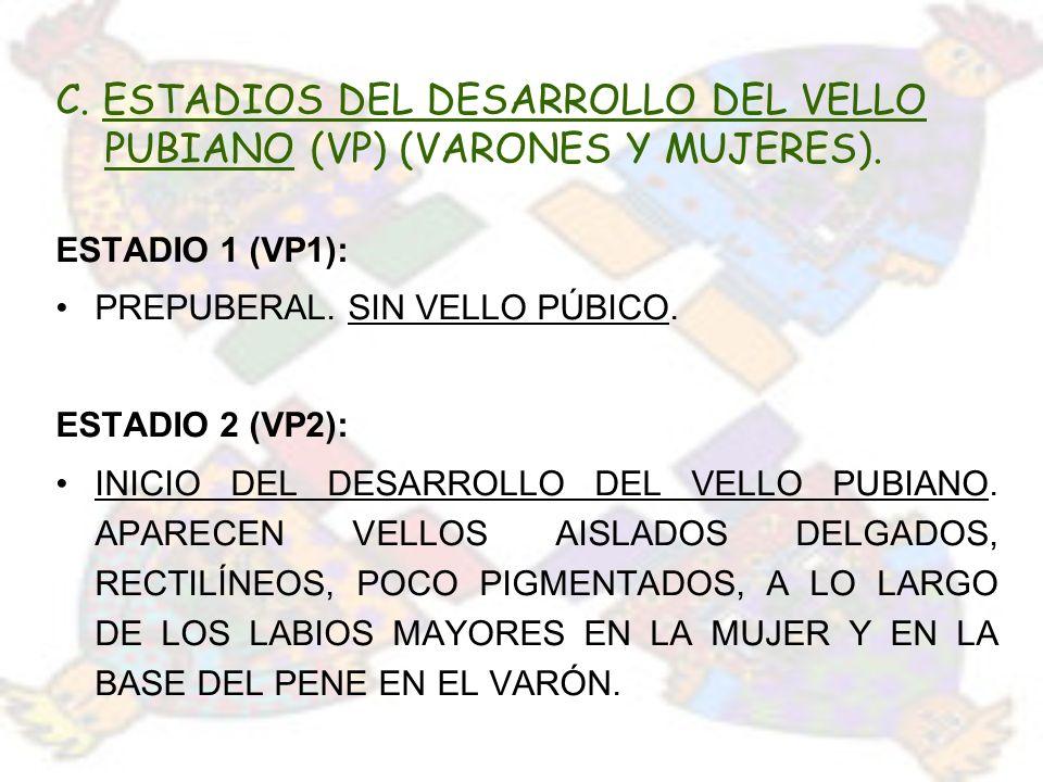 C. ESTADIOS DEL DESARROLLO DEL VELLO PUBIANO (VP) (VARONES Y MUJERES). ESTADIO 1 (VP1): PREPUBERAL. SIN VELLO PÚBICO. ESTADIO 2 (VP2): INICIO DEL DESA