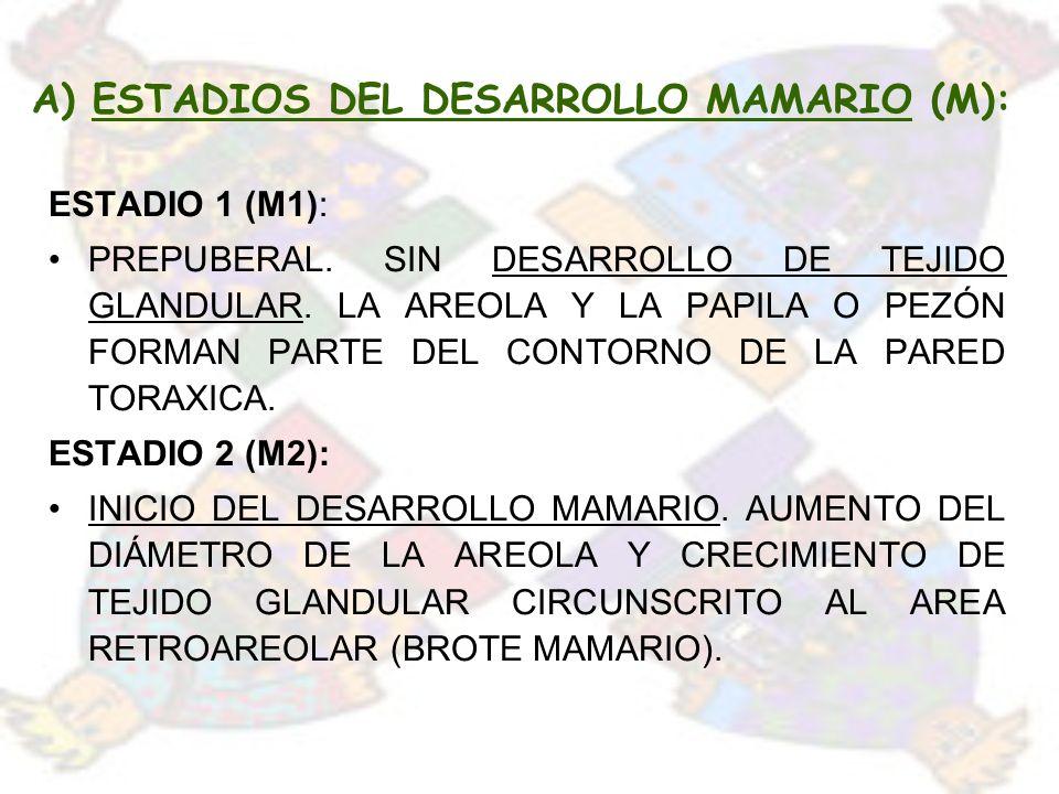A) ESTADIOS DEL DESARROLLO MAMARIO (M): ESTADIO 1 (M1): PREPUBERAL. SIN DESARROLLO DE TEJIDO GLANDULAR. LA AREOLA Y LA PAPILA O PEZÓN FORMAN PARTE DEL