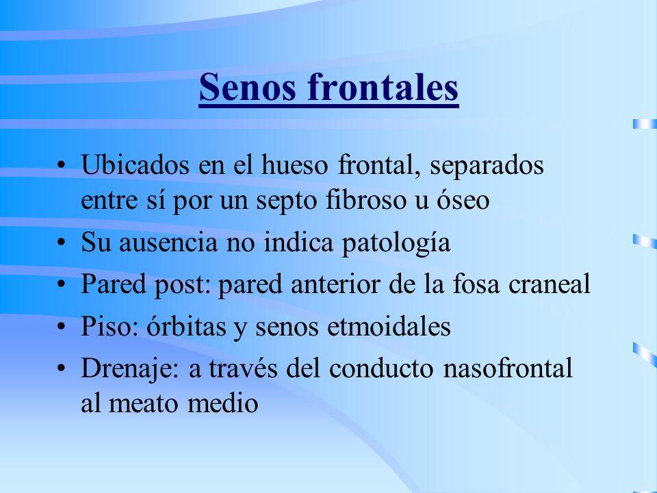 Senos frontales Ubicados en el hueso frontal, separados entre sí por un septo fibroso u óseo Su ausencia no indica patología Pared post: pared anterio