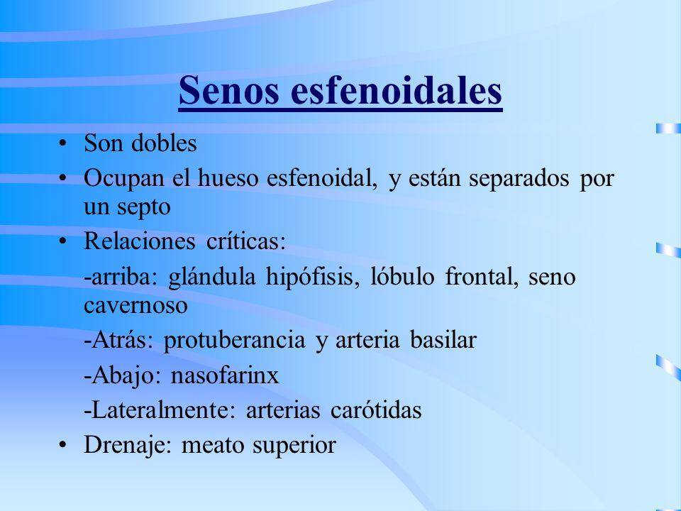 Senos esfenoidales Son dobles Ocupan el hueso esfenoidal, y están separados por un septo Relaciones críticas: -arriba: glándula hipófisis, lóbulo fron