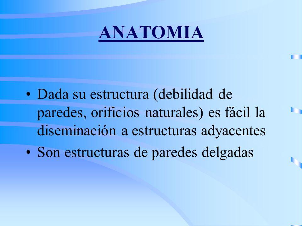 Fibrosarcoma Angiosarcoma Hemangiopericitoma Condrosarcoma Sarcoma de Kaposi