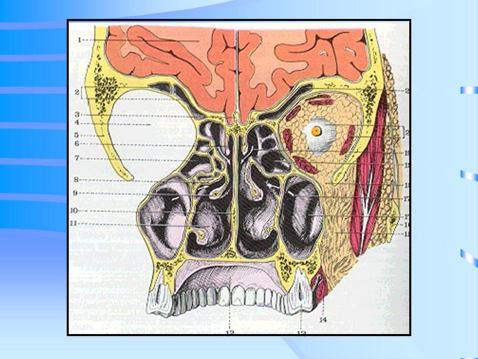 T.C Tiene la capacidad para demostrar densidad de tejidos blandos y huesos Identifica la extensión tumoral (órbita, cavidad craneana, macizo facial, fosa pterigomaxilar) Ofrece dificultad para distinguir la masa tumoral de la congestión mucosa secundaria a la obstrucción que provoca el mismo