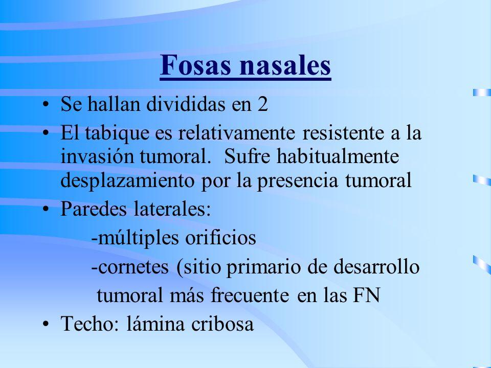 Fosas nasales Se hallan divididas en 2 El tabique es relativamente resistente a la invasión tumoral. Sufre habitualmente desplazamiento por la presenc
