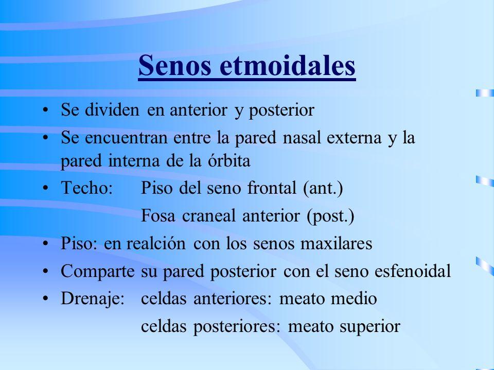 Senos etmoidales Se dividen en anterior y posterior Se encuentran entre la pared nasal externa y la pared interna de la órbita Techo: Piso del seno fr
