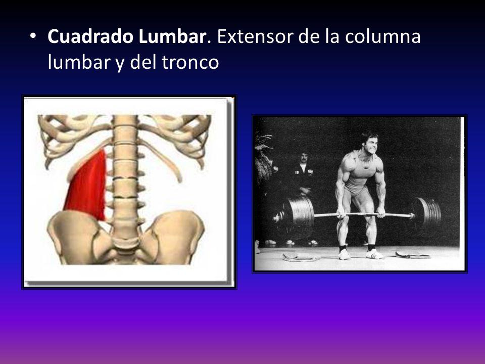 Cuadrado Lumbar. Extensor de la columna lumbar y del tronco